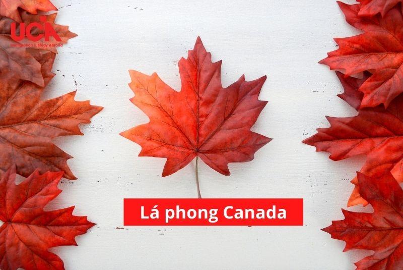 Lá phong đỏ Canadabiểu tượng trên quốc kỳ