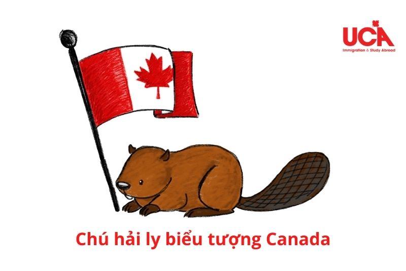 Chú hải ly biểu tượng Canada