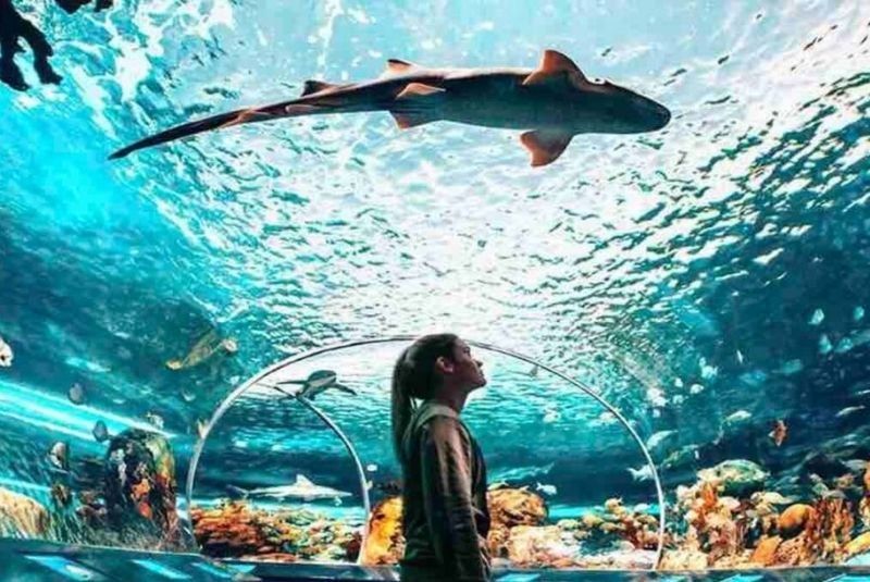 Ripley-Aquarium-of-Canada
