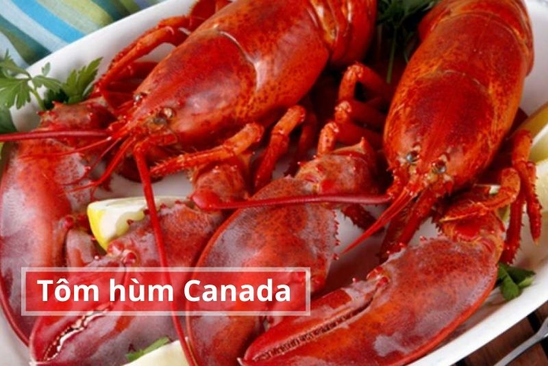 Tôm hùm Canada