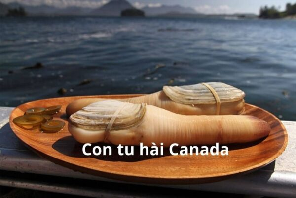 Con tu hài Canada