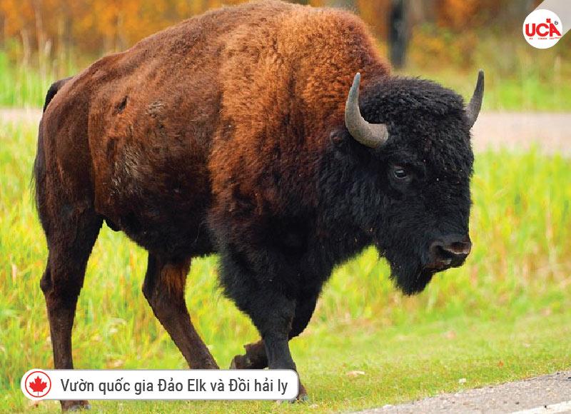 Vườn quốc gia Đảo Elk và Đồi hải ly